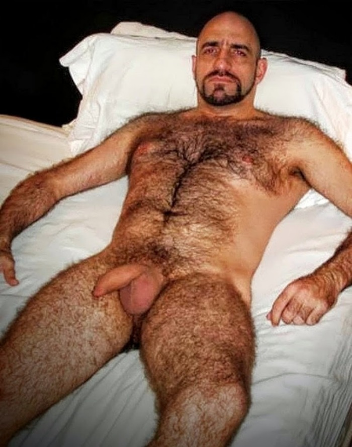 Free gay hairy hung pictures